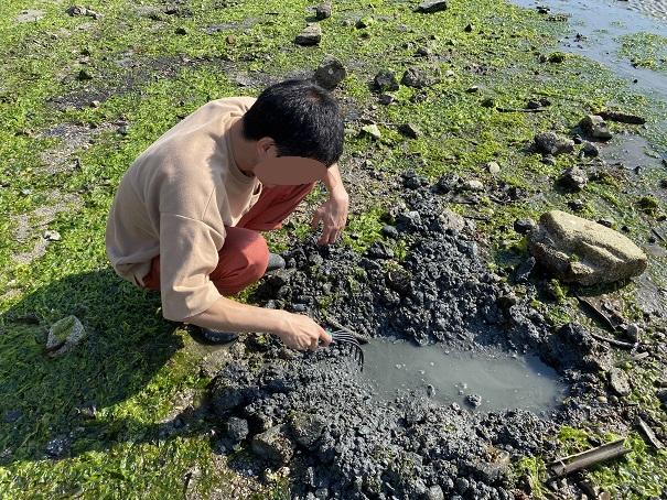潮干狩りアサリの掘り方