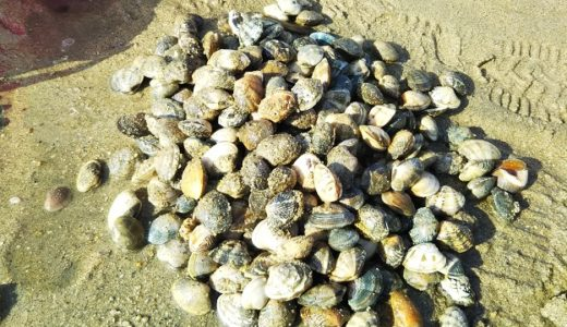 あさりやマテ貝を潮干狩り 香川県から日帰り 四国中国地方のおすすめ
