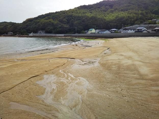 沙美海水浴場 西浜マテ貝