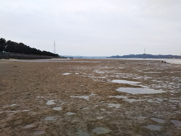 高梁川河口 干潟1