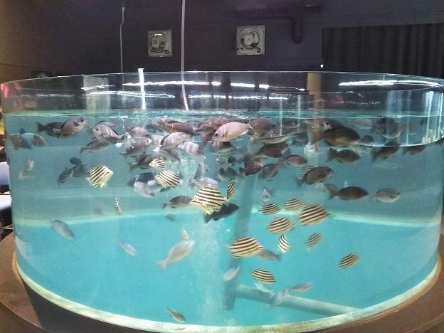 むろと廃校水族館 水槽3