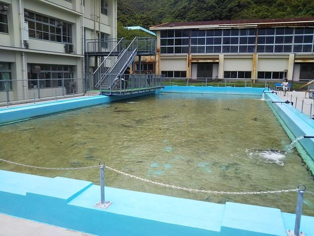むろと廃校水族館 プール