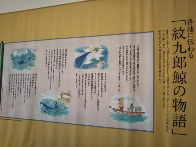 鯨館 紋九郎鯨物語
