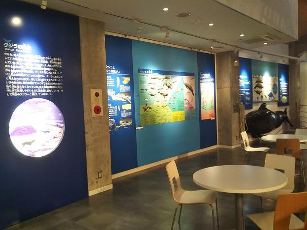 鯨館 クジラの生態展示