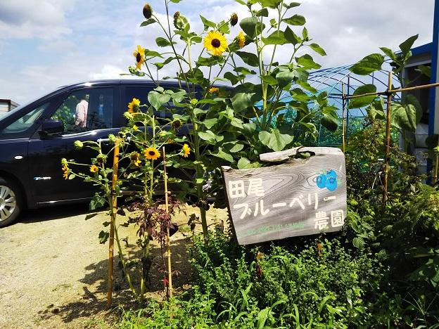 田尾ブルーベリー農園