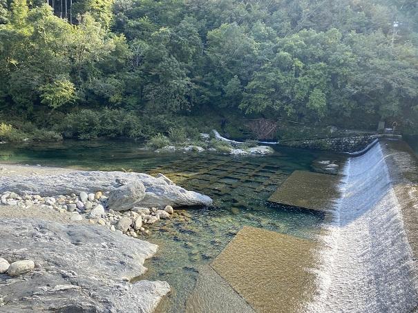 汗見川滝の下でアユやアマゴがたくさん