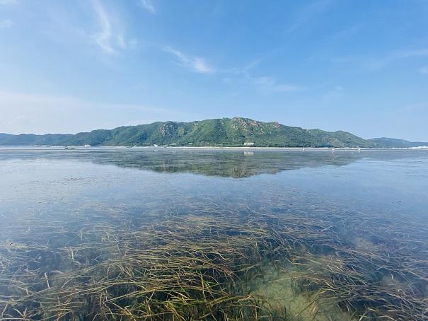 からこと丸紋甲イカがいる藻場