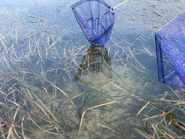 紋甲イカのたも網の取り方