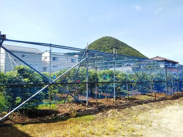 ブルーベリー畑摘み取り園