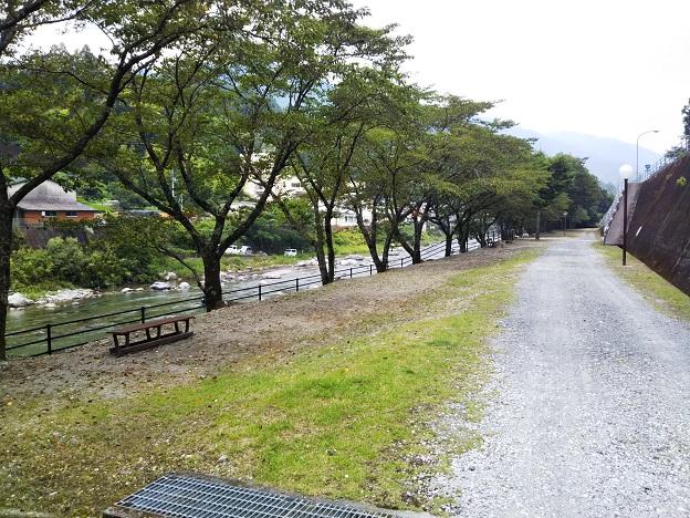 仁淀川 オートキャンプ場 テントサイト