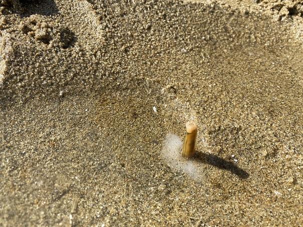 マテ貝が出てくる