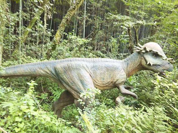 みろくの里 パキケファロサウルス