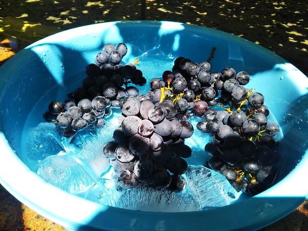 氷水でニューベリーAを冷やして食べる