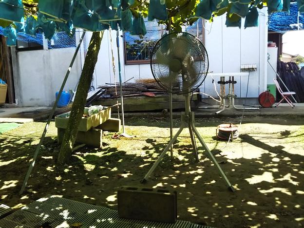 山川ぶどう園扇風機