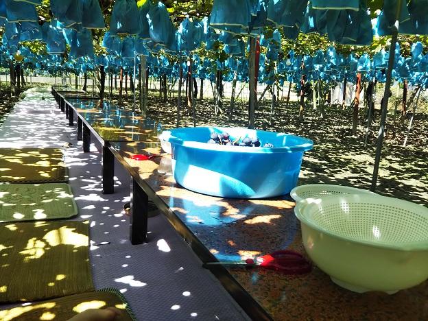 山川観光ぶどう園の座席