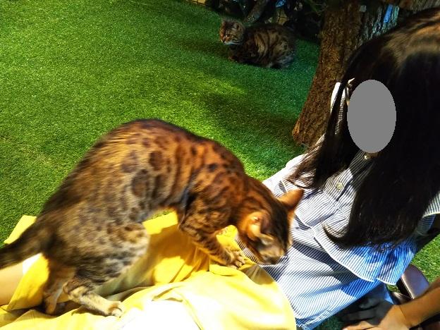 ヒョウ猫の森 抱っこ