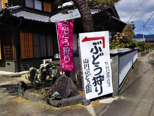 山川観光ぶどう園の看板