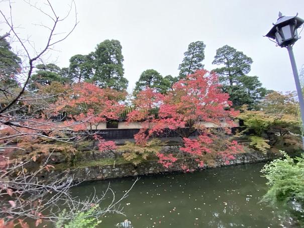 倉敷美観地区秋の紅葉