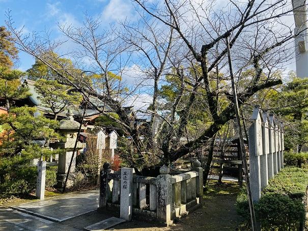 左近の桜田村神社