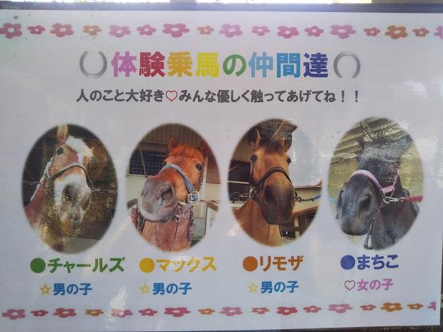 蒜山ホースパーク 乗馬体験の馬