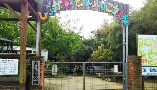 渋川動物公園 岡山県玉野市の自然の中で動物と触れ合える動物園