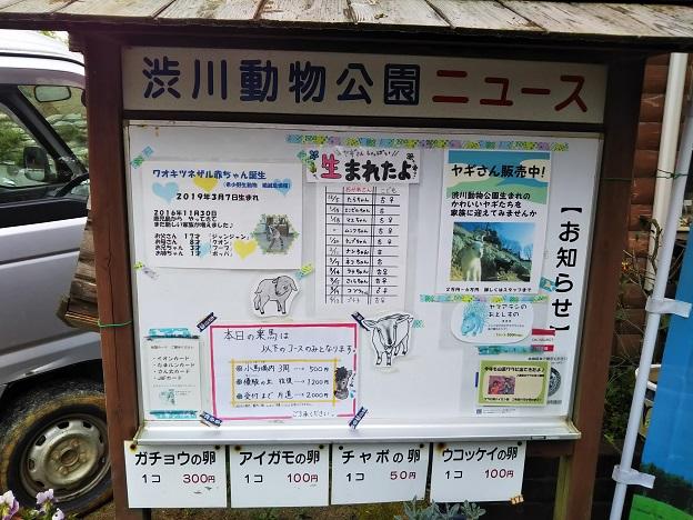 渋川動物公園 ニュース