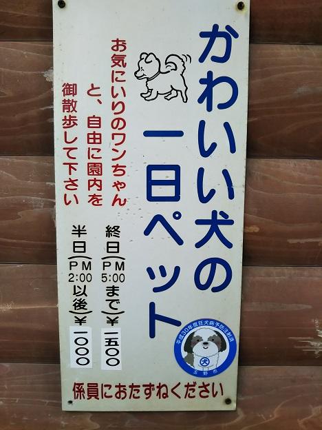 渋川動物公園 いぬ