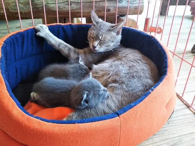 渋川動物公園 猫の赤ちゃん