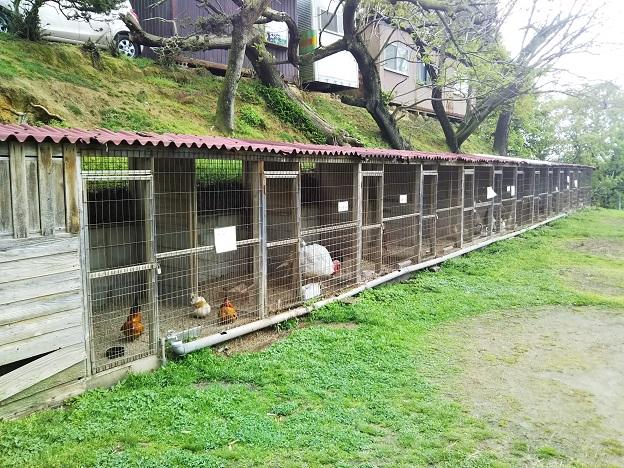 渋川動物公園 鳥小屋