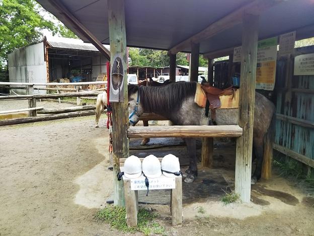 渋川動物公園 乗馬