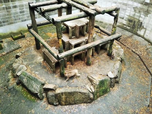 渋川動物公園 サル