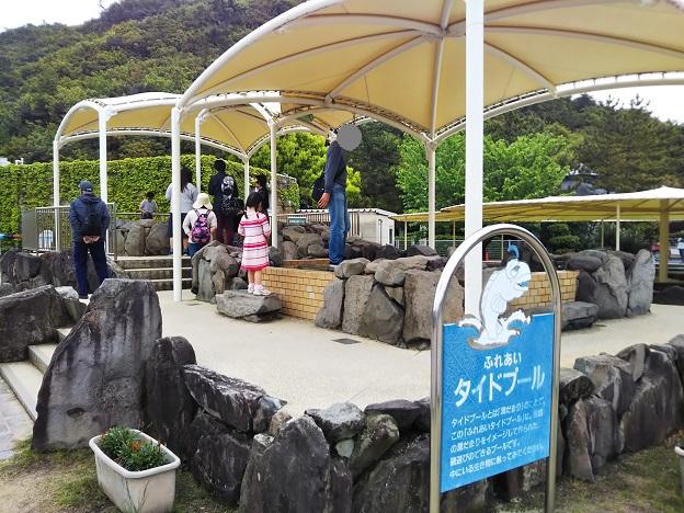 渋川マリン水族館 タイドプール