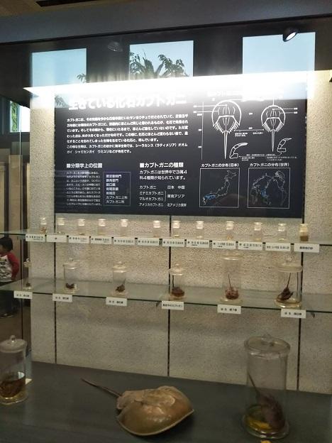渋川マリン水族館 展示室