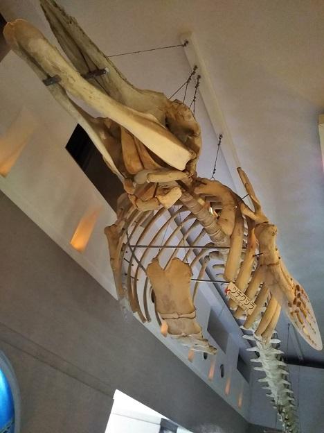 渋川マリン水族館 ツチクジラ