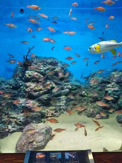 渋川マリン水族館 魚