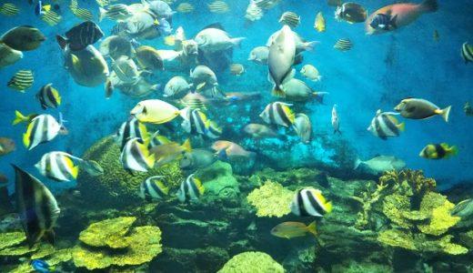 渋川マリン水族館(市立玉野海洋博物館)岡山県の小さいけれど楽しい水族館