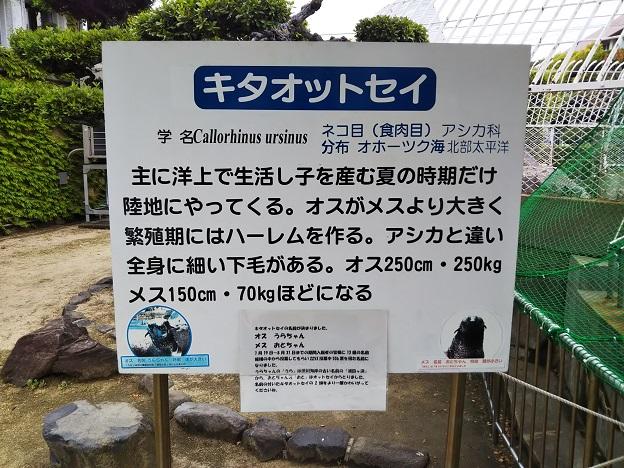 渋川マリン水族館 オットセイ1
