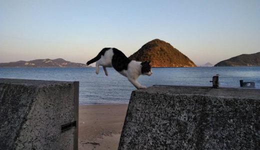 香川県のねこと遊べる猫島やネコカフェcafeやシェルター等とエサやおもちゃや道具