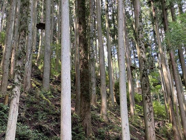 木の陰から見えるフォレストアドベンチャー