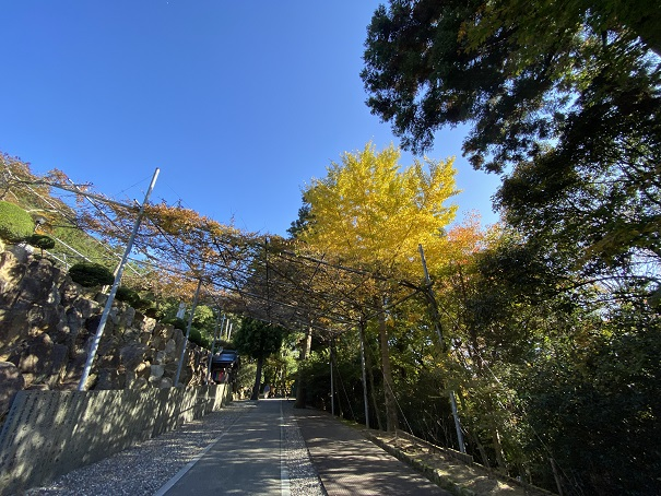 大窪寺大師堂付近の紅葉