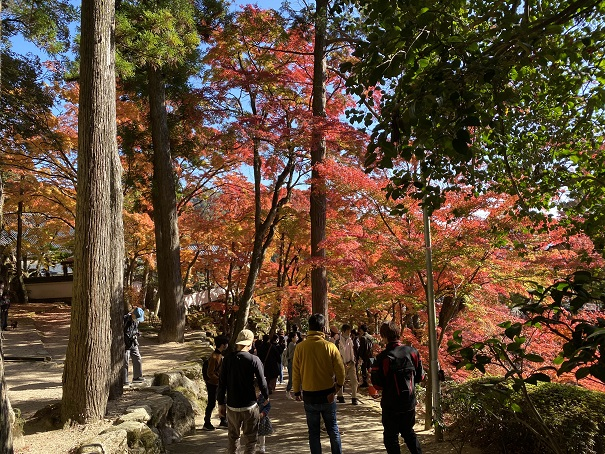 大窪寺のきれいな紅葉