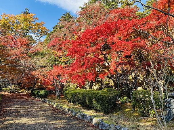 大窪寺参道の紅葉