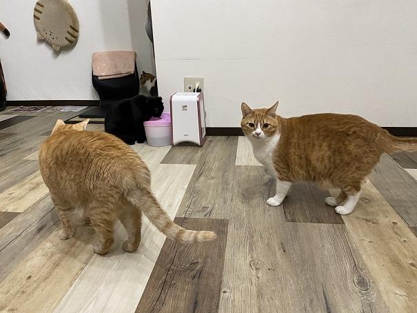 肉灸 プレイルーム猫2