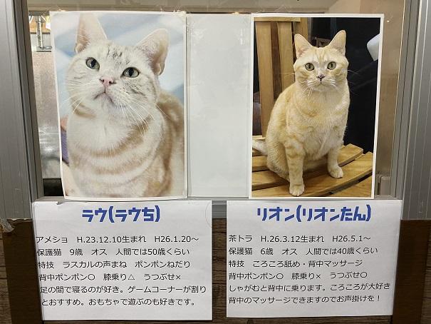 肉灸 プレイルームのネコ3