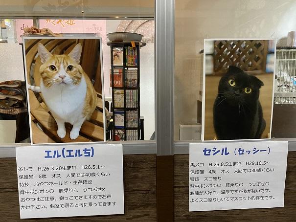 肉灸 プレイルームのネコ4
