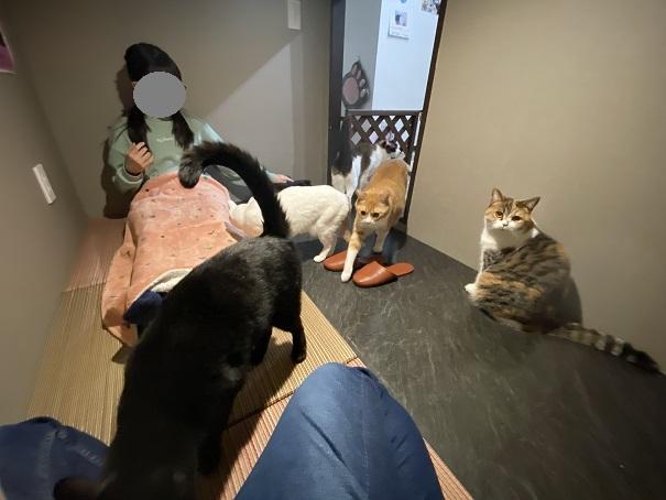 肉灸 個室猫が入ってきてくれる