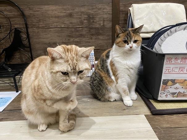 肉灸 プレイルーム猫5