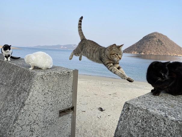 香川県のねこと遊べる猫島