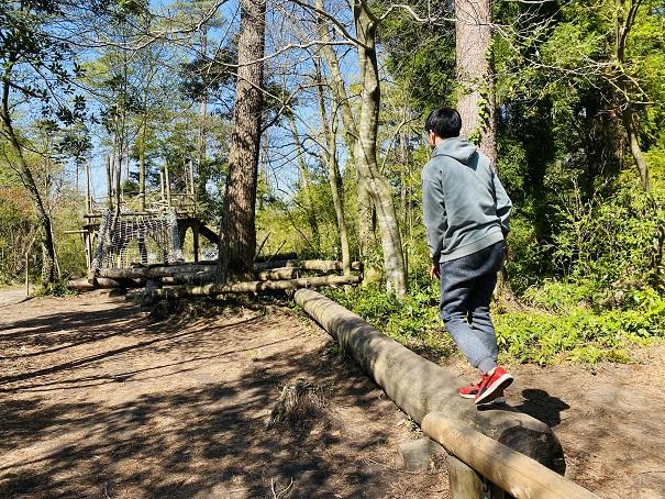 ファイヤーストーム森の国