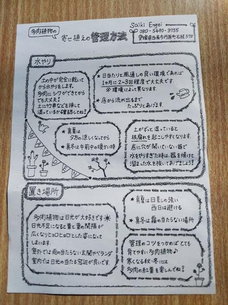 Saiki Engei 多肉植物育て方